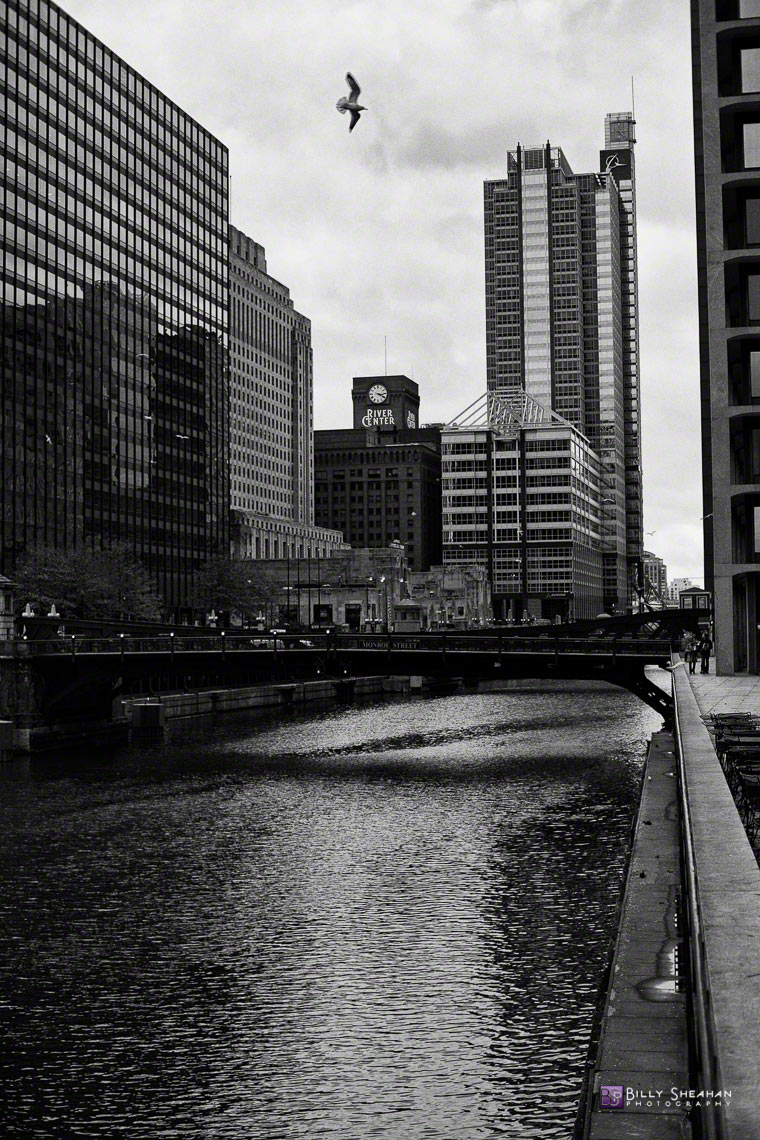 Bird_Over_Chicago_River_Chicago_26Nov2006_005_BW_D