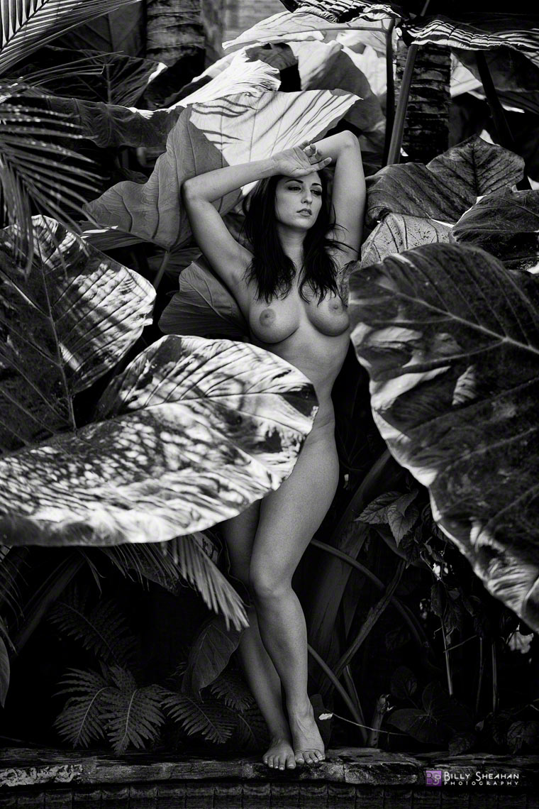 Carlotta_Champagne_Banana_Leaves_at_Todos_Santos_Inn_Carlotta_25Oct2011_0062_BW_D