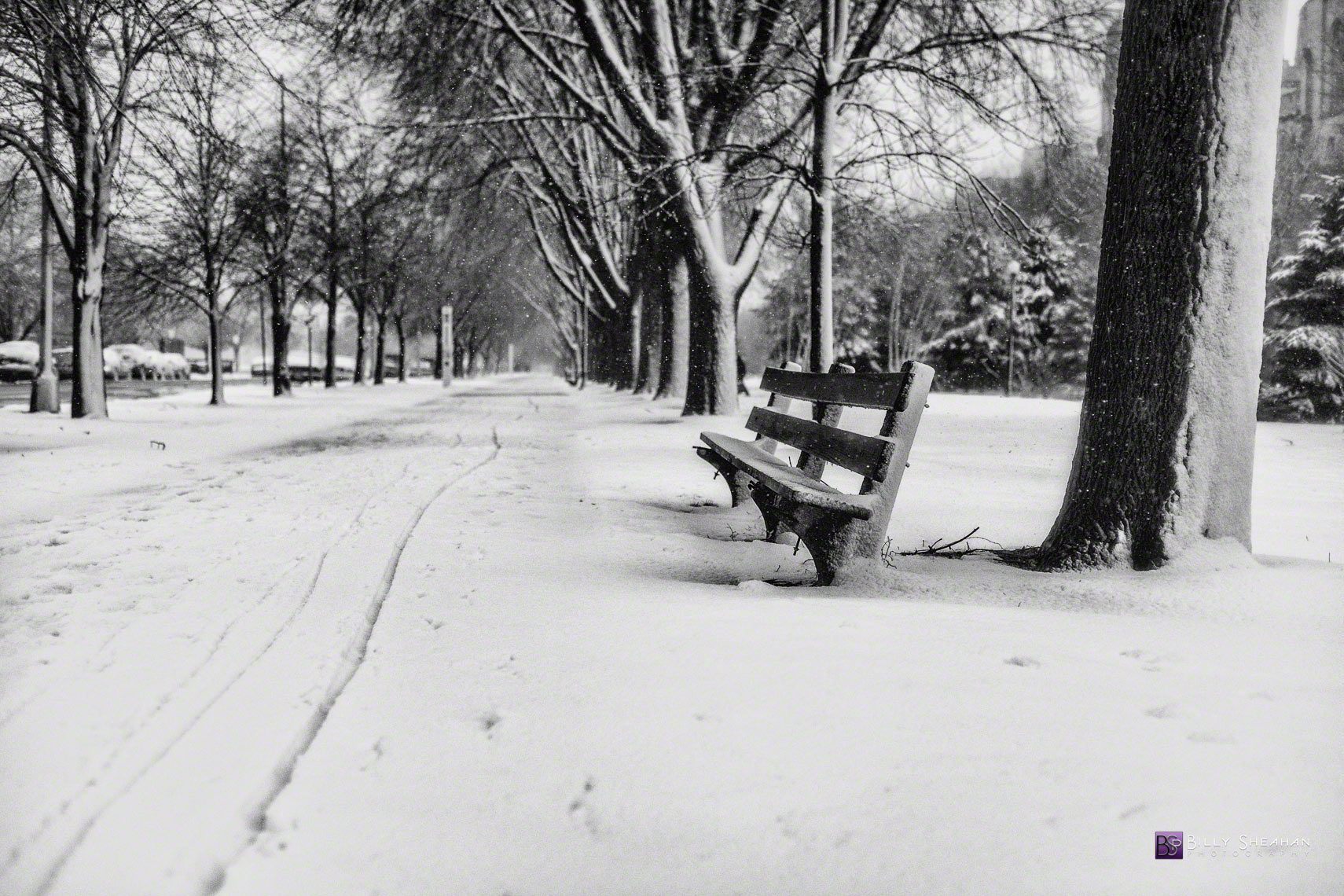 Snowy Path and Bench