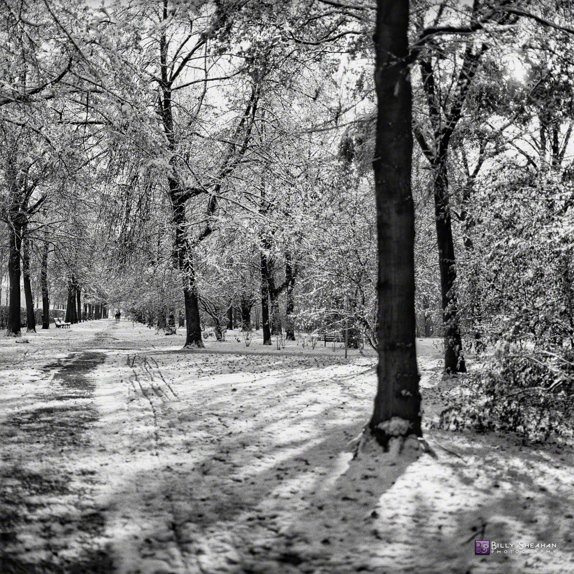 Tiergarten_Snowy_Path__Berlin__Germany_Germany-360_01_BW_D
